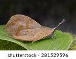 macro image of a brown dead... | Shutterstock . vector #281529596