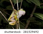 close up image of a wallace's... | Shutterstock . vector #281529692