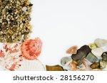 cockleshells | Shutterstock . vector #28156270
