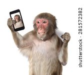 Funny Monkey Taking A Selfie...
