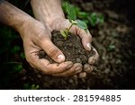 Hands Holding Young Plant With...