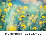 Yellow Flowers In Meadow