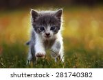 Stock photo little kitten is running on the grass 281740382