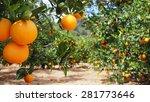 bloomy orange garden in...   Shutterstock . vector #281773646