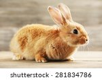 Stock photo little rabbit on wooden background 281834786