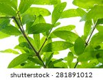 photo under green leaves with... | Shutterstock . vector #281891012