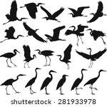 bird   herons   Shutterstock .eps vector #281933978