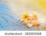 Frangipani Flower And Seashell...