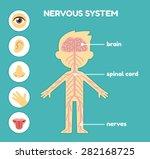 nervous system  educational... | Shutterstock .eps vector #282168725