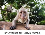 Monkey Macaque Siting On The...