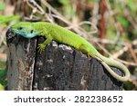 lizard green blue color on a... | Shutterstock . vector #282238652