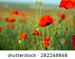 field of poppies on sunset | Shutterstock . vector #282268868