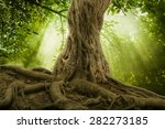 Big Tree Roots And Sunbeam In ...