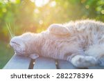 Playful Domestic Cat Lying On...
