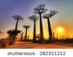beautiful baobab trees at... | Shutterstock . vector #282321212
