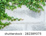 The Green Creeper Plant On A...