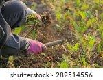 weeding hands | Shutterstock . vector #282514556