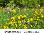 Meadow Buttercup In A Meadow A...