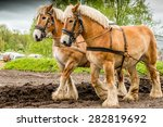 Couple Of Draft Horses Plowing...
