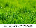 Grass Background. Green Grass...