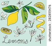 Lemons Drawing Of A Lemon ...