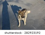 homeless dog | Shutterstock . vector #282923192