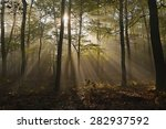 Forest With Sun Rays Filtering...