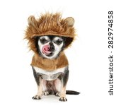 a tiny chihuahua in a lion... | Shutterstock . vector #282974858