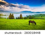 Horse Grazing In A Meadow...