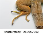 Top View Of Green Iguana Leg O...