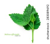 fresh mint leaves isolated on... | Shutterstock . vector #283089692
