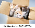 Stock photo little kittens in a cardboard box 283109786