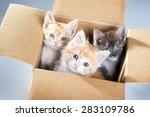 Little Kittens In A Cardboard...