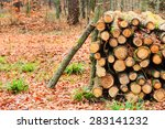 Wooden Logs. Timber Logging In...