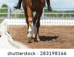 close up of the horse hooves in ... | Shutterstock . vector #283198166