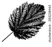autumn  leaf  on white... | Shutterstock . vector #283238465