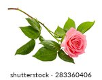 Pink Roses Bouquet On A White...