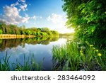 Trees By Calm River In The...