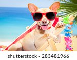 chihuahua dog relaxing on a... | Shutterstock . vector #283481966