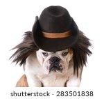 Funny Dog Wearing Western Hat...