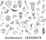 vector drawing vegetables set | Shutterstock .eps vector #283508678