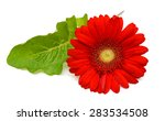 Red Gerbera Flower  Isolated On ...