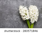 White Hyacinth Flowers On Grey...