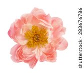 peony flower isolated on a... | Shutterstock . vector #283676786