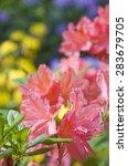 pink azalea closeup with... | Shutterstock . vector #283679705