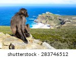 baboon waiting | Shutterstock . vector #283746512