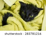 Cute Black Soggy Cat After A...
