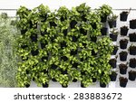 Vertical Green Plant Pattern I...