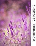 lavender flowers | Shutterstock . vector #284015342