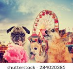 Stock photo three dogs at a carnival of fair eating pink cotton candy toned with a retro vintage instagram 284020385
